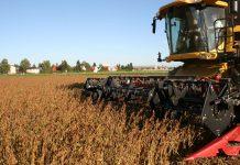 Nach Rückgängen in den vier Jahren davor sind die Bauerneinkommen in Österreich 2016 wieder angestiegen. Außer der Forstwirtschaft konnten alle Sparten zulegen.