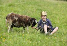 """Ganz so """"wollig"""" wird das Schaf auf der Bühne nicht werden ..."""