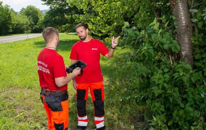 Experten der Bundesforste gehen bei Kontrollen auf Nummer sicher, dass die Bäume entlang der Straßen und Wege standfest und bruchsicher sind.