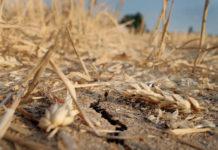 Die enorme Trockenheit setzt der Landwirtschaft heuer besonders zu. Beim Getreide gibt es regionale Ertragsausfälle, das Grünland ist hingegen in weiten Teilen Österreichs geschädigt.