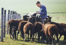 Kürzungen im EU-Budget treffen vor allem Kleinbauern stark. Wie es mit dem weiter gehen soll wird heute besprochen.