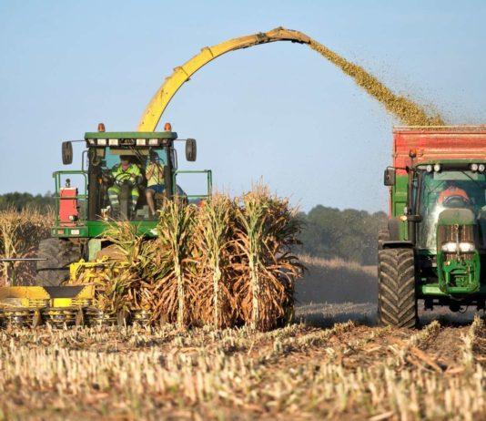 Die Maisernte ist in Oberösterreich trotz Trockenheit und Hitze im Sommer deutlich besser ausgefallen als erwartet,