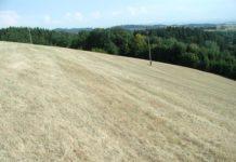Hauptsächlich betroffen von der Dürre waren Bauern im Mühlviertel und im Zentralraum.