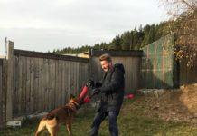 """Das intensive Training von Polizeihunde-Ausbildner Gerald Koller (im Bild) und Tierheim-Leiterin Karin Binder mit """"Ali Baba"""" machte sich bezahlt."""