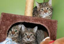 Die Pfotenhilfe bittet um Hinweise aus der Bevölkerung, ob jemand die Katzen kennt.