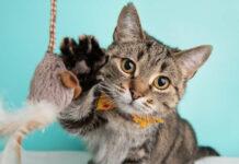 Mit einfach anzufertigenden Spielzeugen kann man Katzen bei Laune halten.