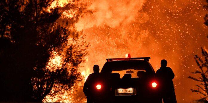 Auch in diesem Pinienwald wüteten die Flammen.