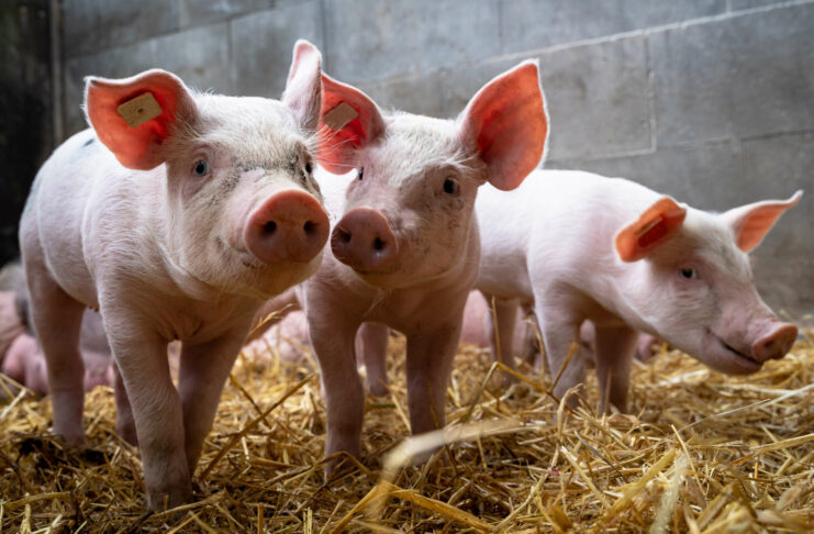 Mit dem gestern unterschriebenen Pakt wird mehr Tierwohl bei der Tierhaltung sicher gestellt.