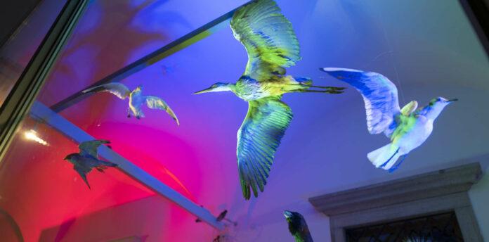 Vor allem nach Einbruch der Dunkelheit ein Hingucker: Die farbenprächtige Schau-Fenster-Ausstellung in den verglasten Arkadengängen des Linzer Schlossmuseums.
