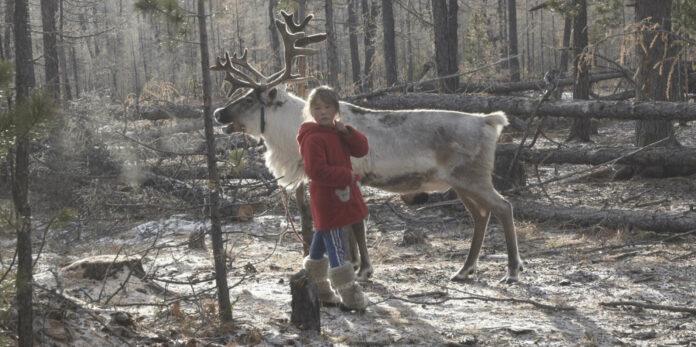 Wegen des Klimawandels und des dadurch ausbleibenden Schnees sind die letzten Dhuka-Rentier-Nomaden vom Aussterben bedroht.