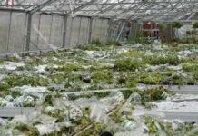 Auch zahlreiche Glashäuser in Oberösterreich wurden durch die Hagelunwetter zerstört.