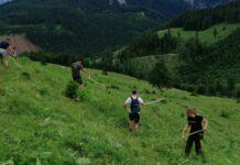 In Oberösterreich werden 400 Almen aktiv bewirtschaftet. Die Tiere wurden in den vergangenen Jahren weniger.
